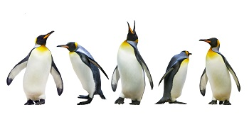Emperor-penguins-smaller_477447133_1459x719